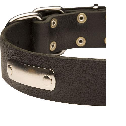 collier en cuir avec plaque d 39 identification pour chien pitbull. Black Bedroom Furniture Sets. Home Design Ideas